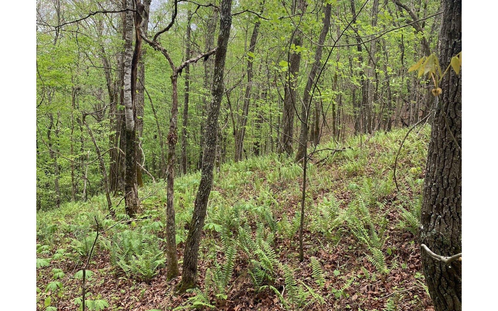 307289 Blue Ridge River Front