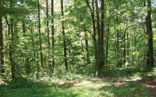 241092 Ellijay Vacant Lot
