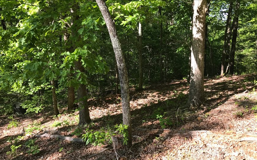 252993 Hayesville Vacant Lot