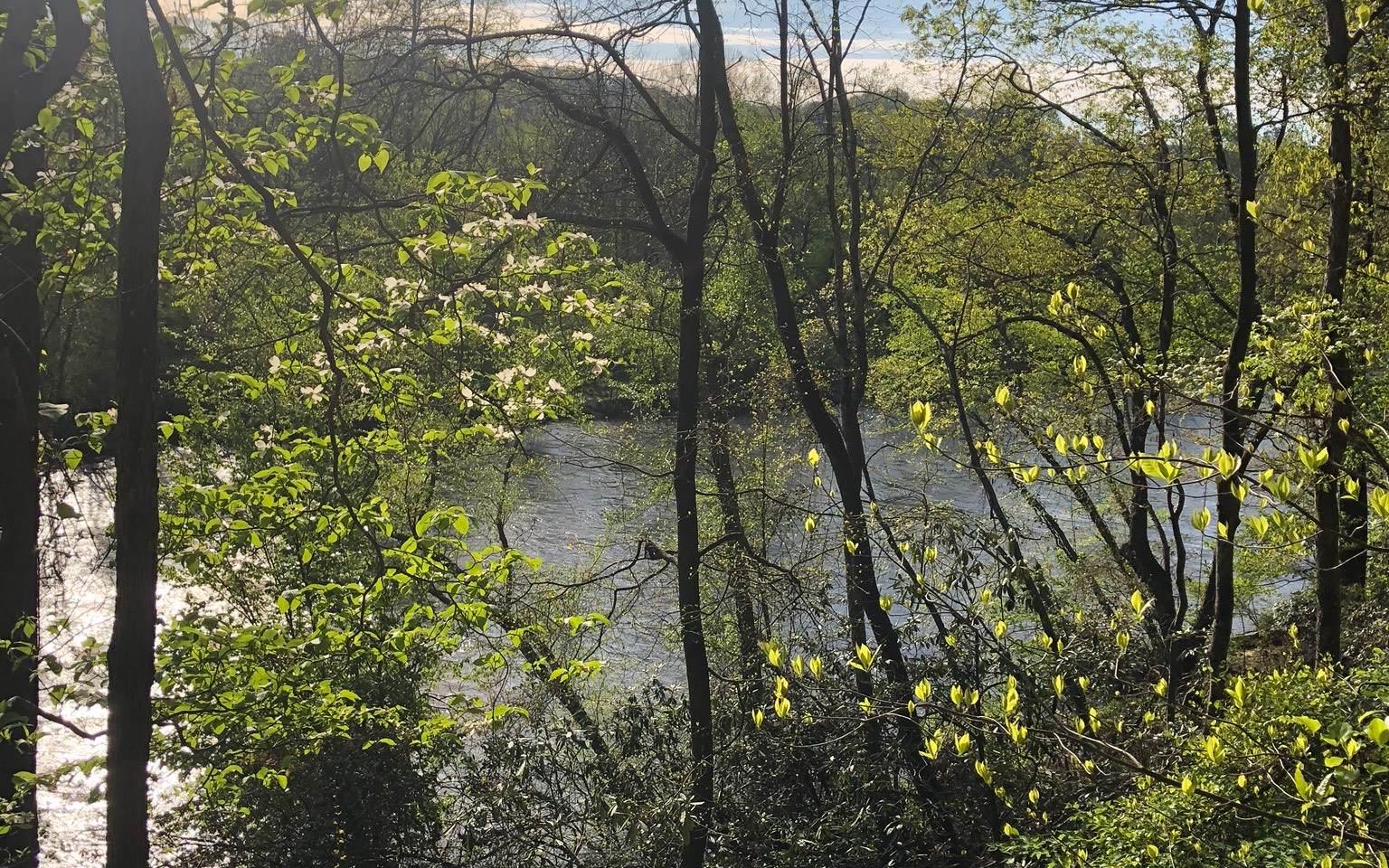 310396 Ellijay River Access Lot