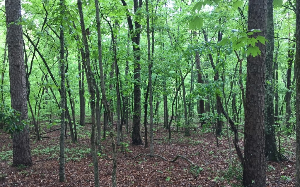 276299 Mineral Bluff River Access Lot